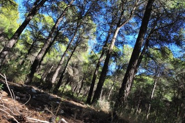 Family activity in the Sierra Espuña throughout April and May