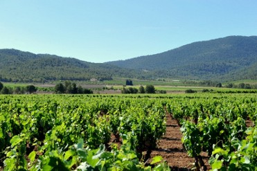 Thursday 27th October ENGLISH language Bullas Wine Tour