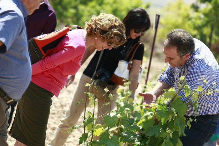Paseo entre viñedos. Ruta del Vino de Yecla