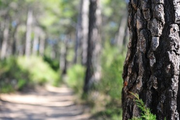 Free activities in the regional parks of Murcia, October to December 2018