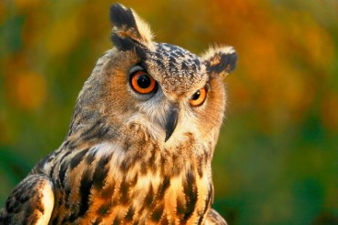 Until 31st October, ornithology exhibition in the Sierra Espu��a visitors centre