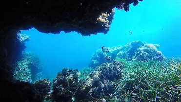 we dive in the marine reserves of Cabo Tiñoso & Islas Hormigas