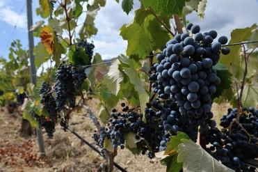 10th December cultural wine tasting in Mazarrón