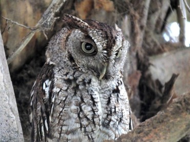 1st to 31st October, owl exhibition at the Sierra Espuña visitors¿ centre