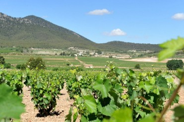 Thursday 25th May ENGLISH guided Bullas wine tour