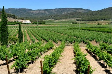 19th September ENGLISH language guided Bullas wine tour (Bodegas Monastrell)